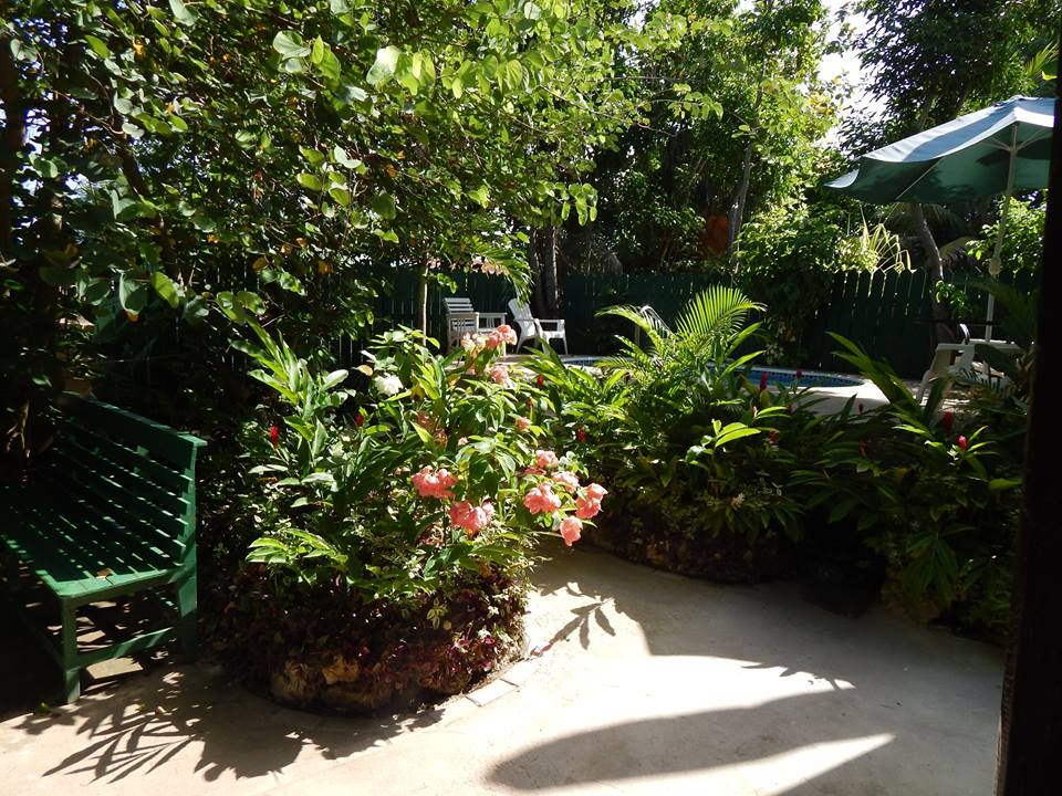 Our secluded garden