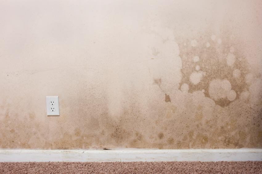 http://www.bostonglobe.com/lifestyle/real-estate/2015/03/26/how-advice-wet-walls-ceilings/csucEdVuZ8eytyfKhxJznM/story.html