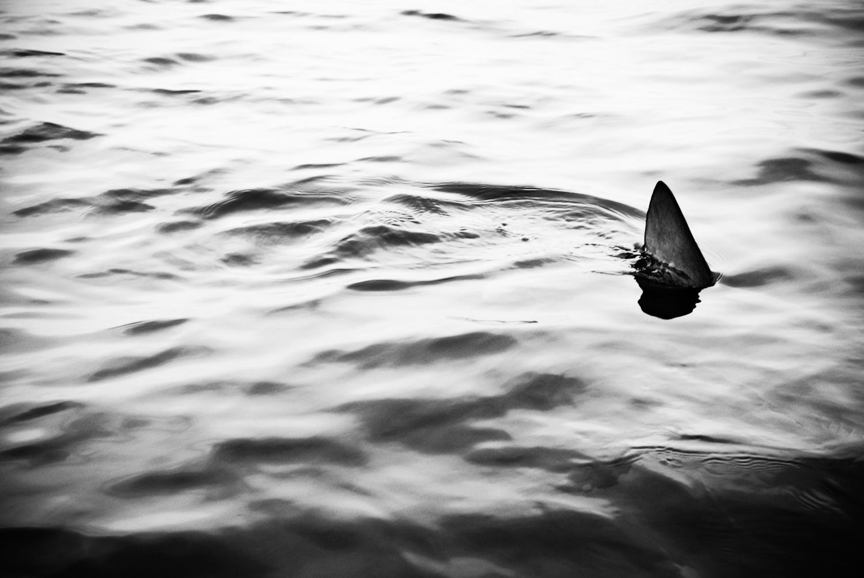 06_copi_vojta_fear_of_shark_0512.jpg