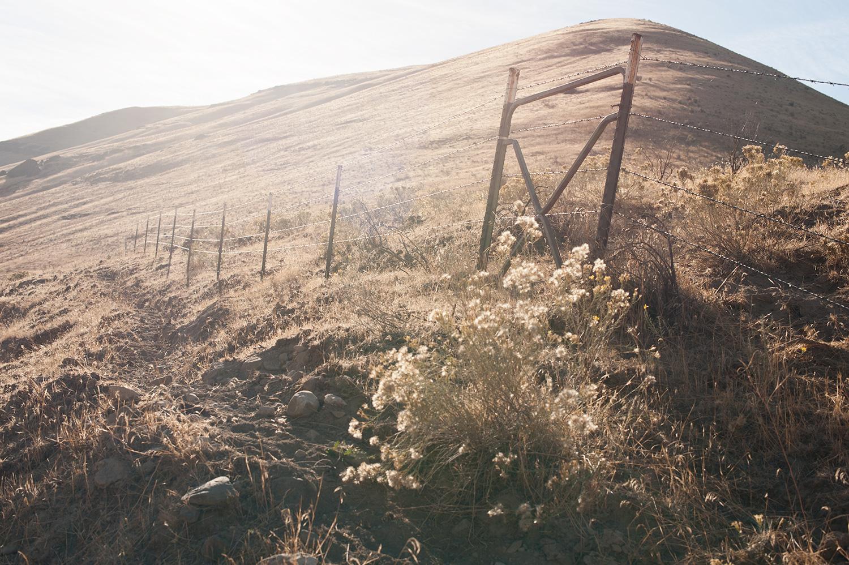 151022_cow_trails_3477.jpg