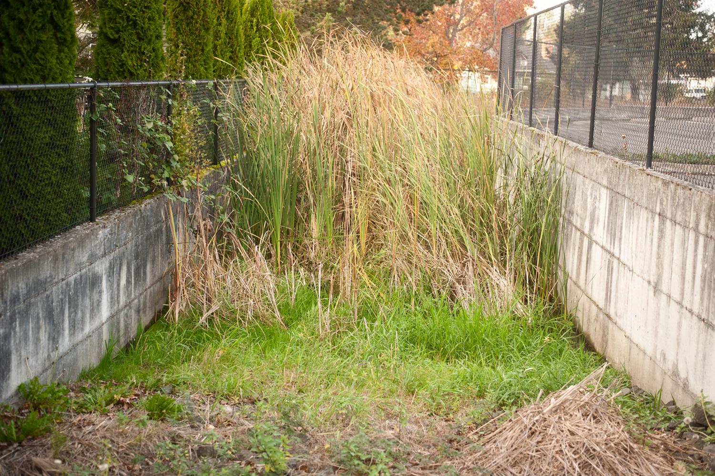 151027_urban_wetlands_between_concrete_walls_4510.jpg