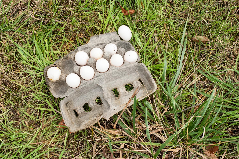 151203_neighborhood_eggs_7577.jpg
