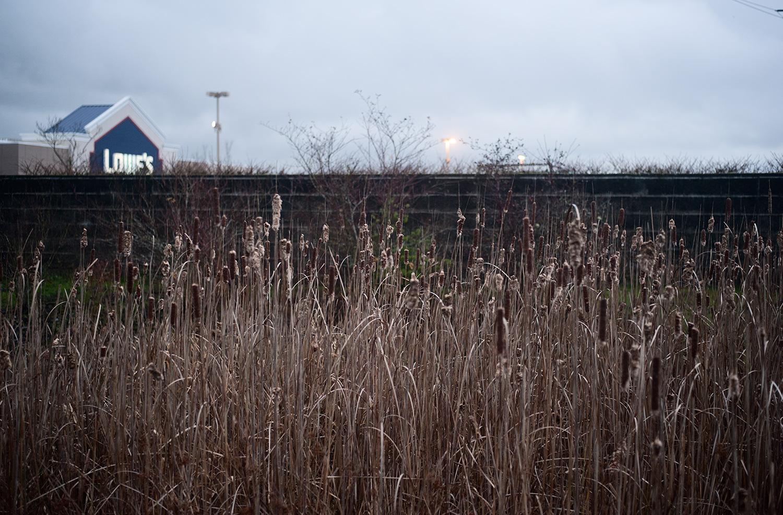 151207_urban_wetlands_7635.jpg