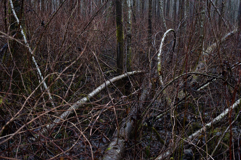 151225_writing_in_the_woods_8440.jpg