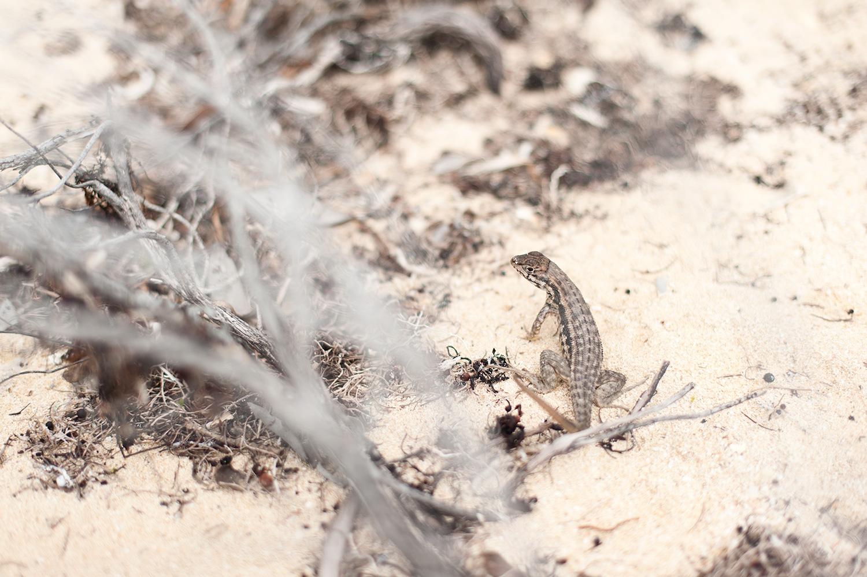 160211_cool_lizard_1833.jpg