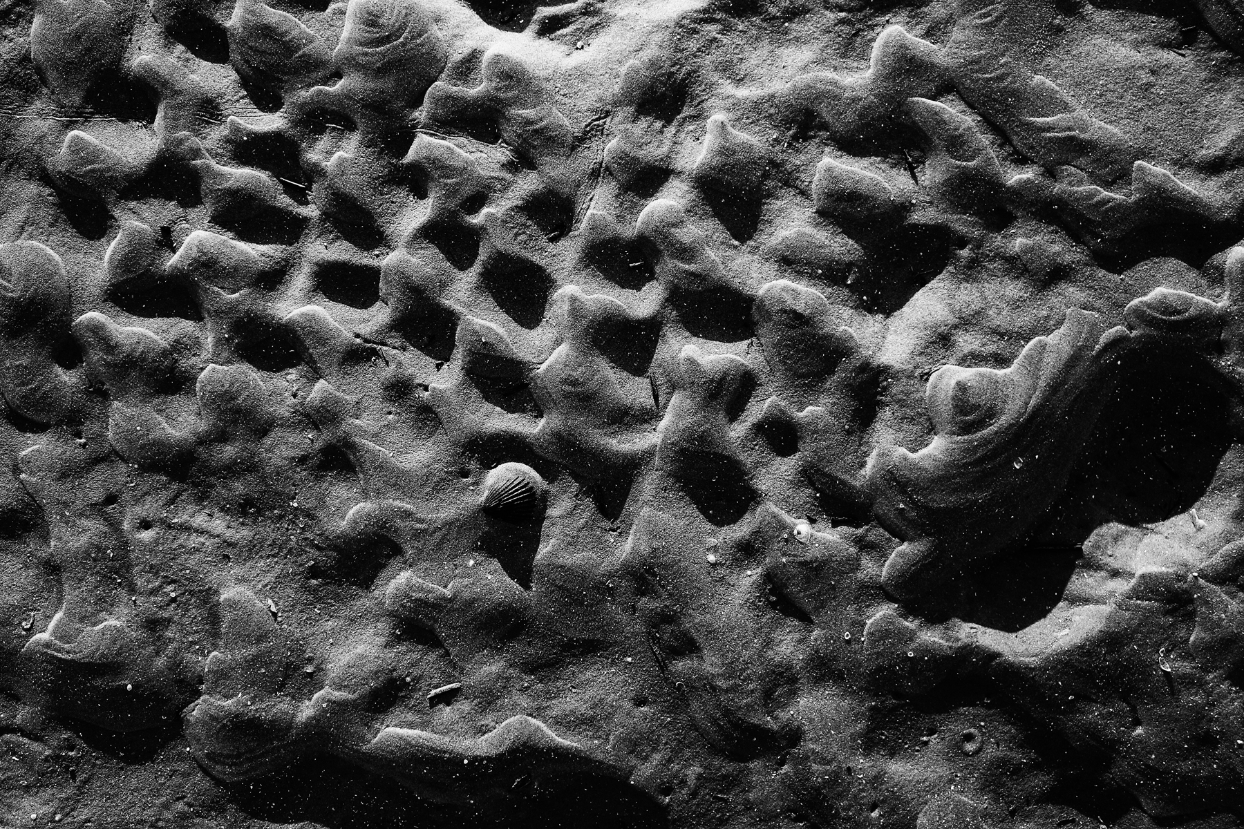 Assateague-Island-2017-Sand-Waves-and-Shell-web.png