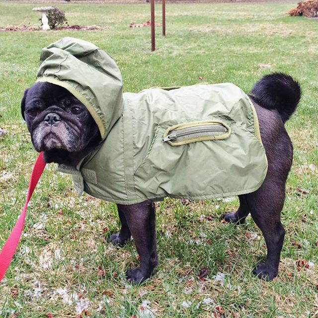 Wrigley is rocking his new rain jacket. Came in the nick of time.