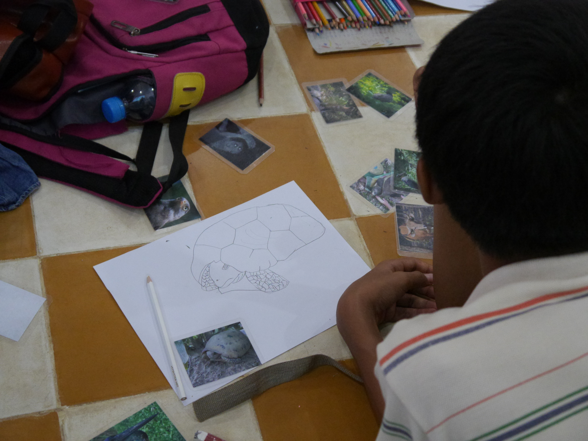 Students drawing wild animals from across Cambodia.