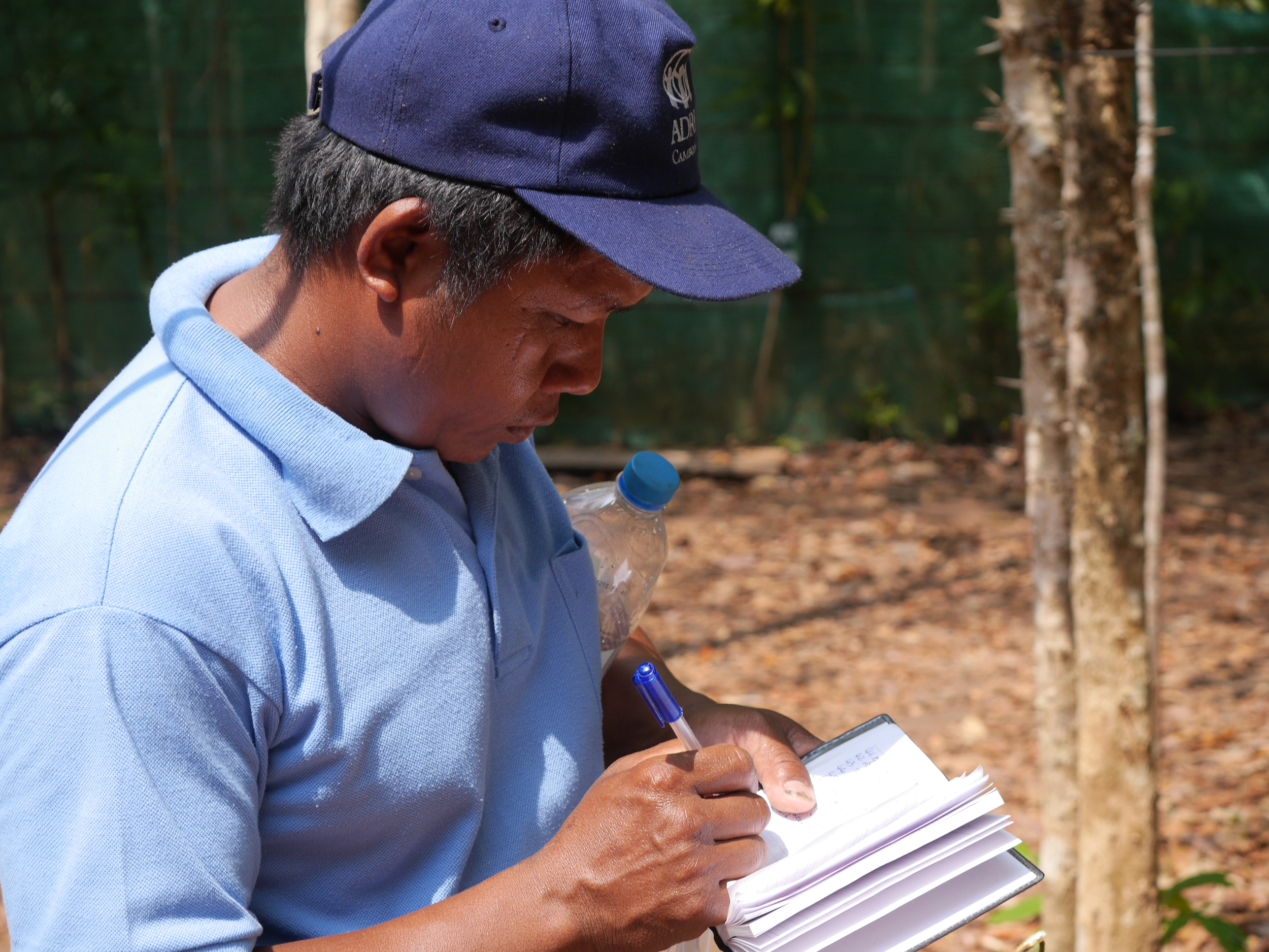Jombok Hoas staff help prepare materials for a new Tree ID Book,
