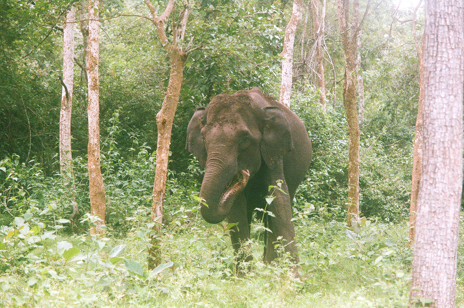 LauraHelenWinn_KabiniElephant_Eating