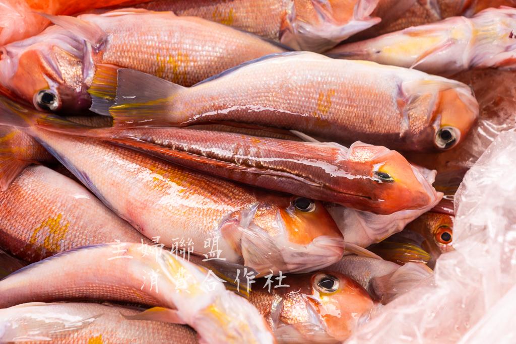 - 打開塑膠袋滿滿的新鮮馬頭魚
