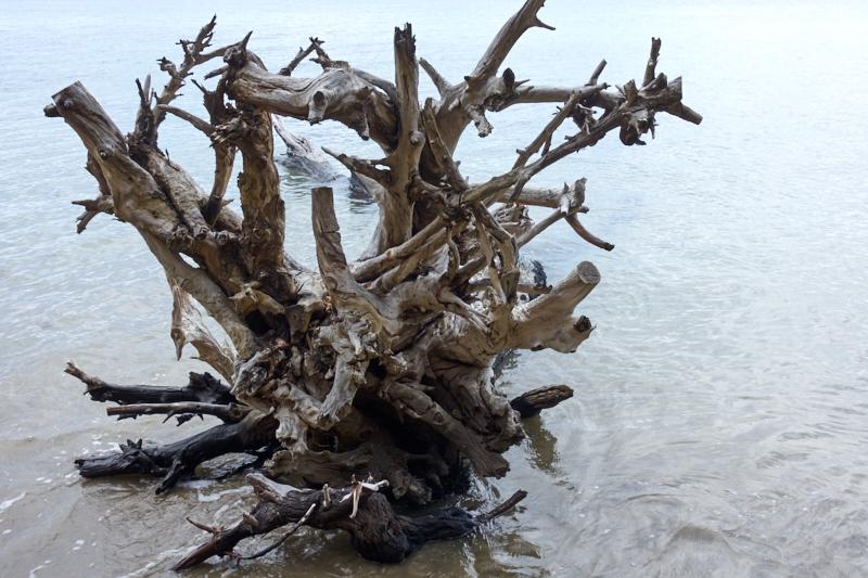 Fallen Roots  1 1.jpg