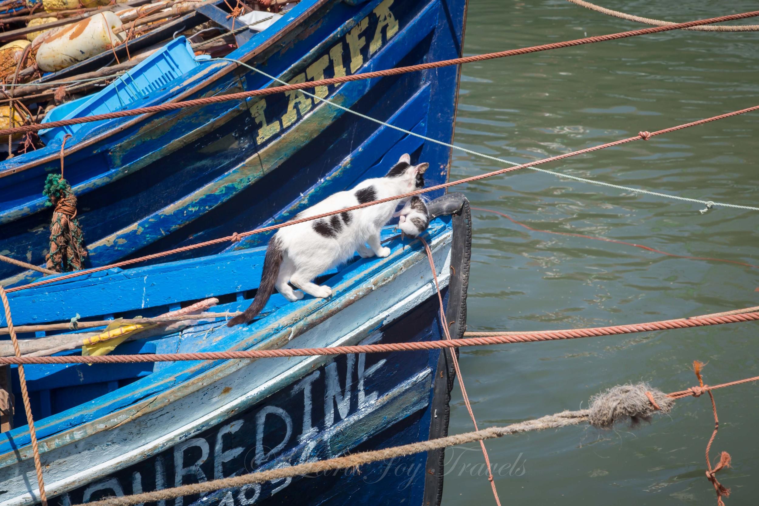 morrocan cats-19.jpg