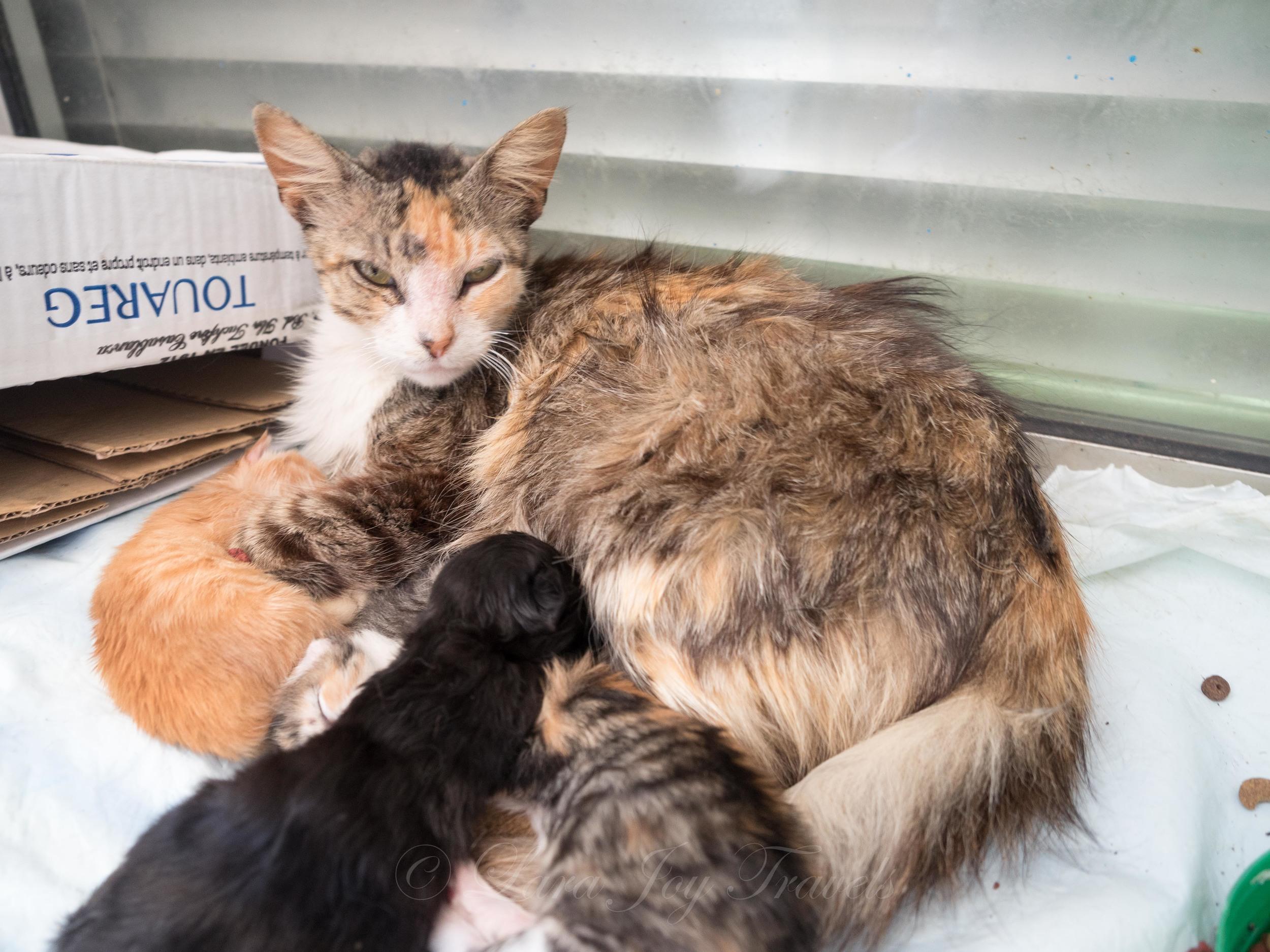 morrocan cats-13.jpg