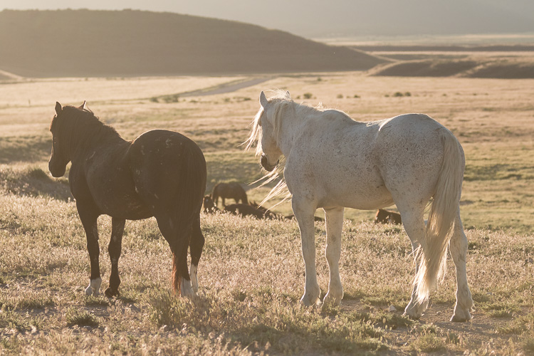 Onaqui-Wild-Horses-6.jpg
