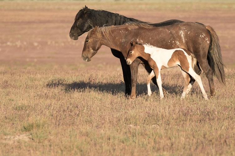 Onaqui-Wild-Horses-8.jpg