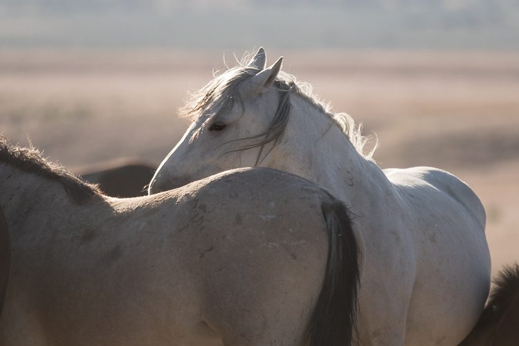 Onaqui-Wild-Horses-13.jpg