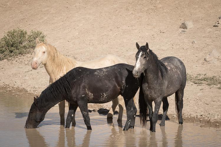 Onaqui-Wild-Horses-40.jpg