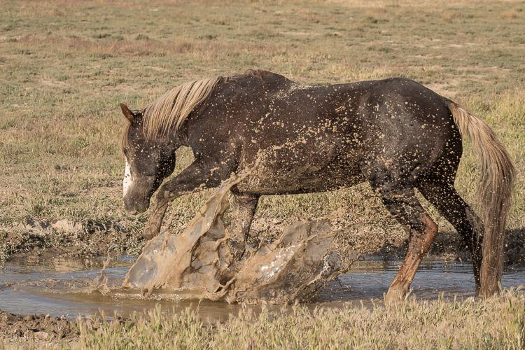 Onaqui-Wild-Horses-48.jpg