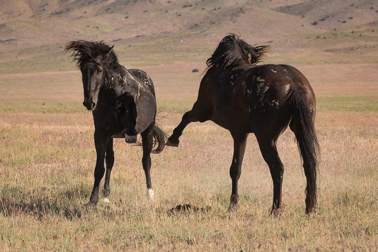 Onaqui-Wild-Horses-60.jpg