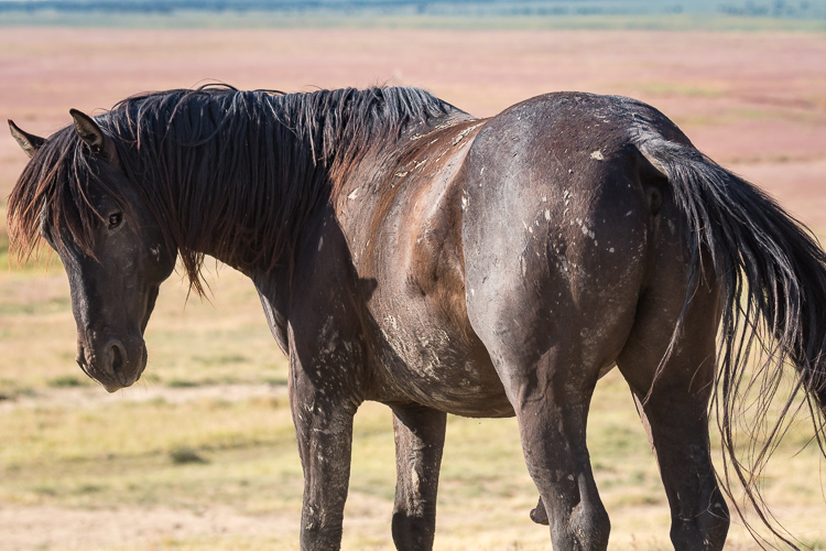 Onaqui-Wild-Horses-64.jpg