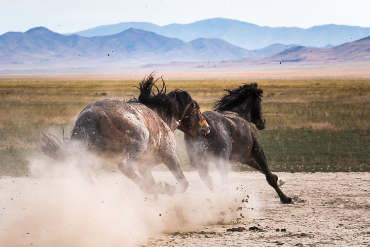 Onaqui-Wild-Horses-78.jpg