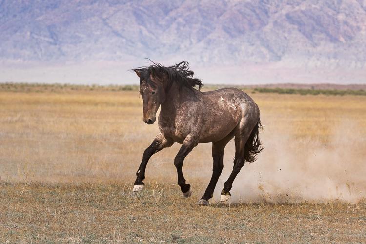 Onaqui-Wild-Horses-80.jpg