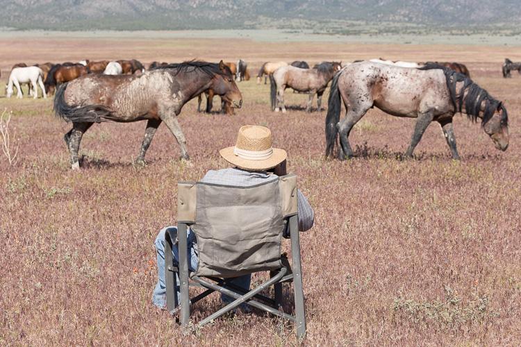 Onaqui-Wild-Horses-109.jpg