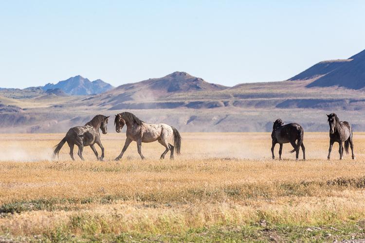Onaqui-Wild-Horses-123.jpg