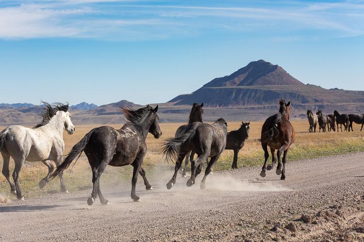 Onaqui-Wild-Horses-134.jpg