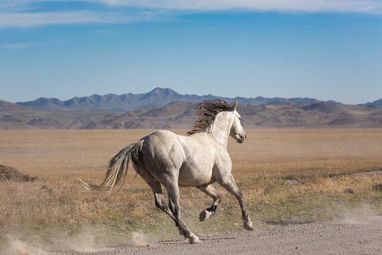 Onaqui-Wild-Horses-153.jpg