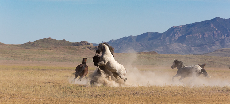 Onaqui-Wild-Horses-159.jpg