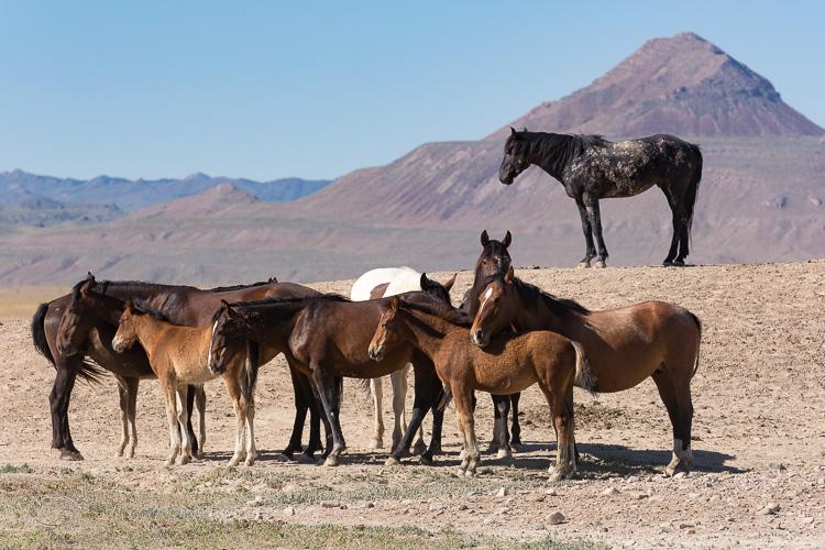Onaqui-Wild-Horses-185.jpg