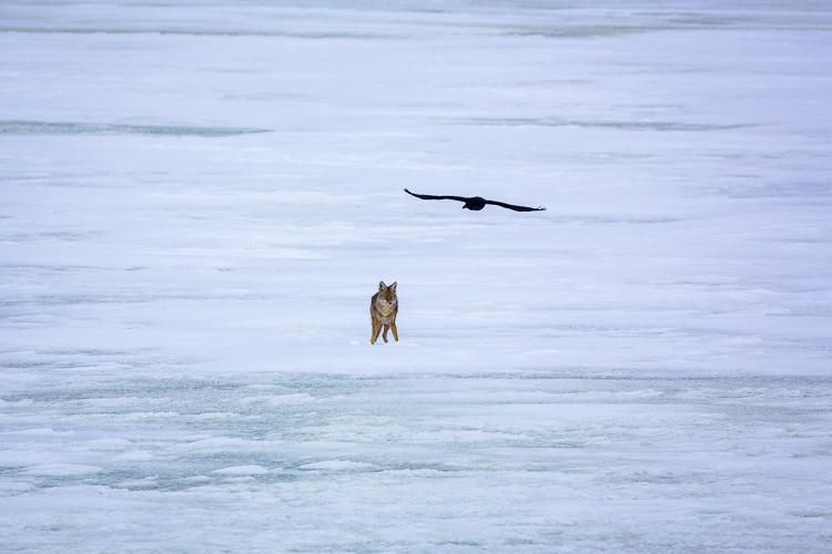 coyote-antelope-state-park-utah