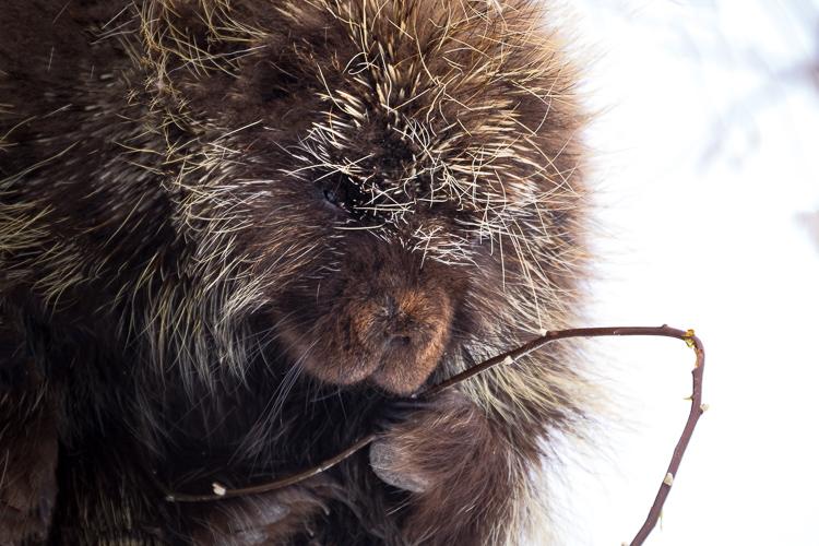 porcupine-antelope-state-park-utah.