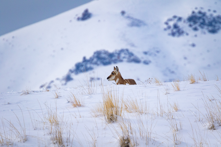 pronghorn-antelope-state-park-utah