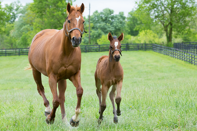 Thoroughbred mare and her new foal, Paris, KY.