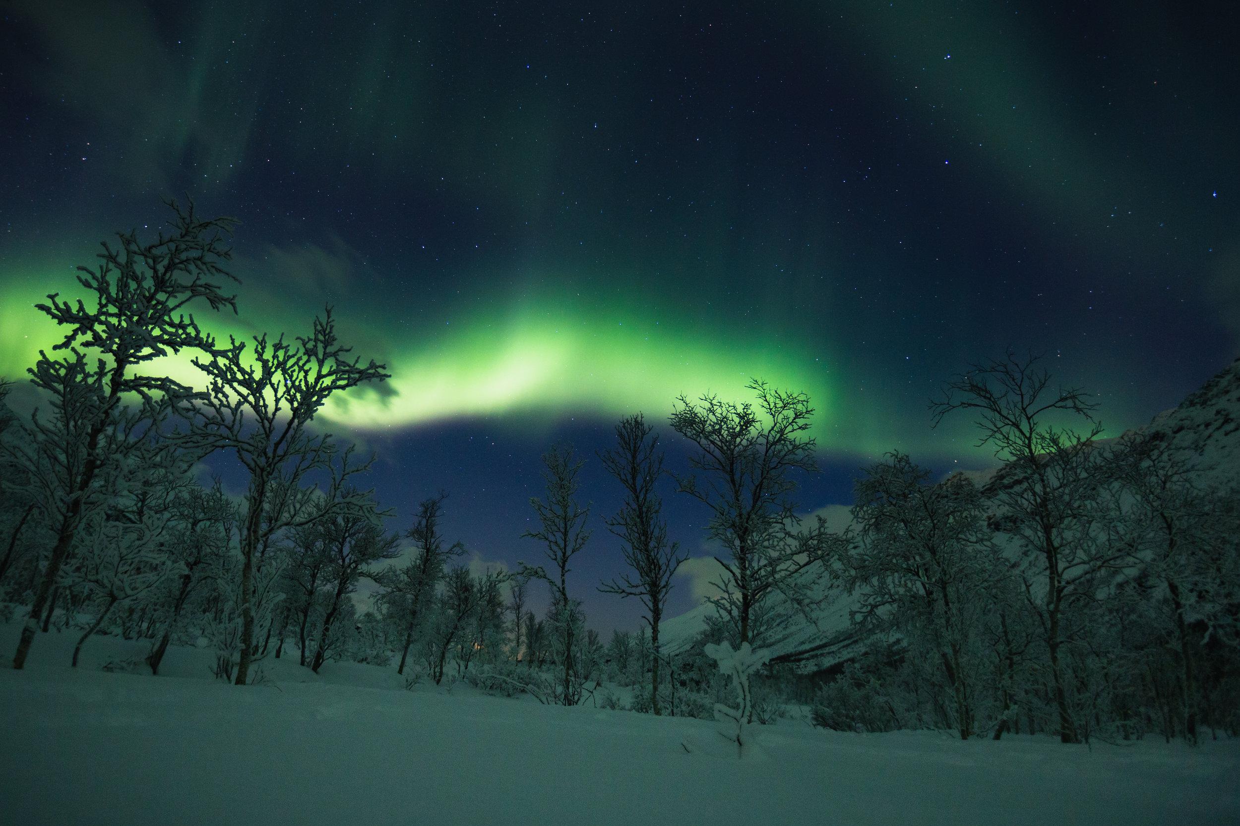 Northern Lights Show. Tromsø, Norway (Dec. 2017)