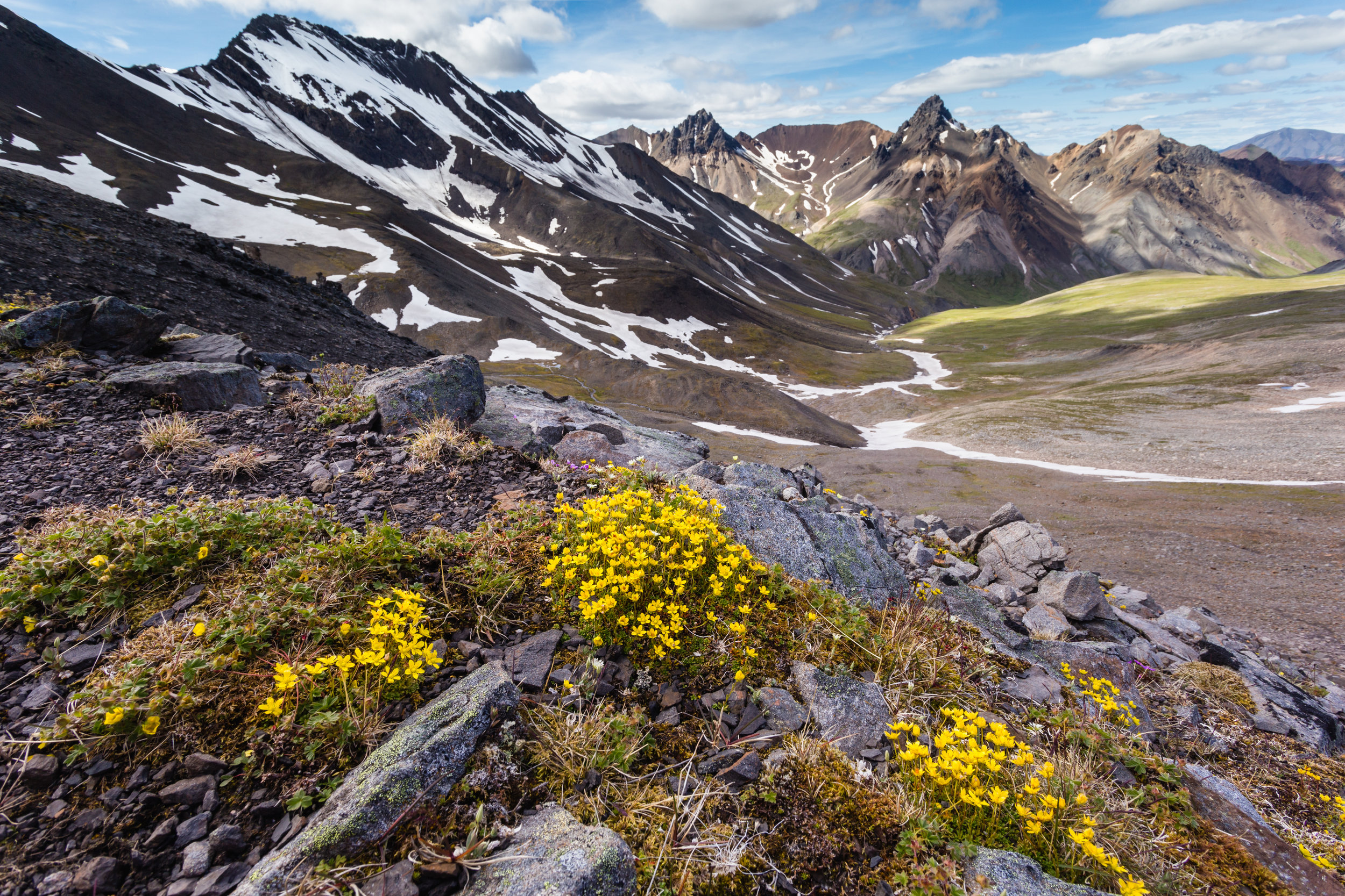 Calico Creek Color. Denali N.P., Alaska (July 2018)