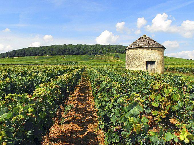 Côte de Nuits Wine Trail Gas - $30