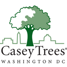 caseytreeslogo.png