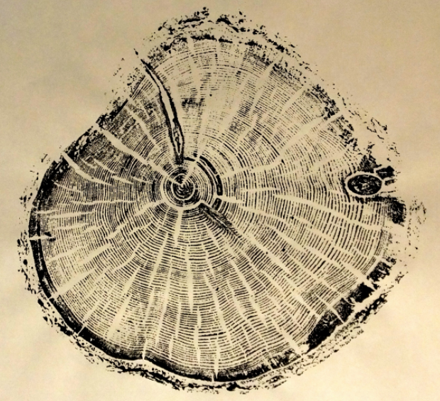 Old-Pine.Albion-Bason