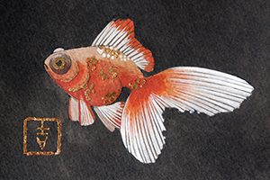 goldfish black water