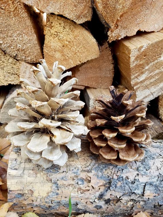 The Posh Pine