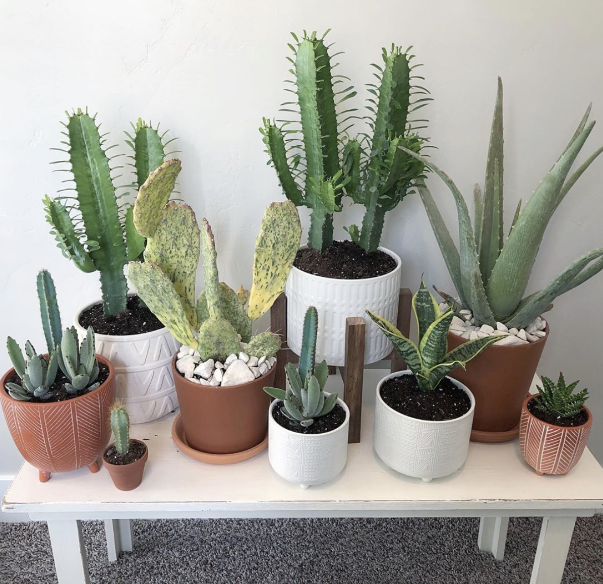 Potted Plant Co