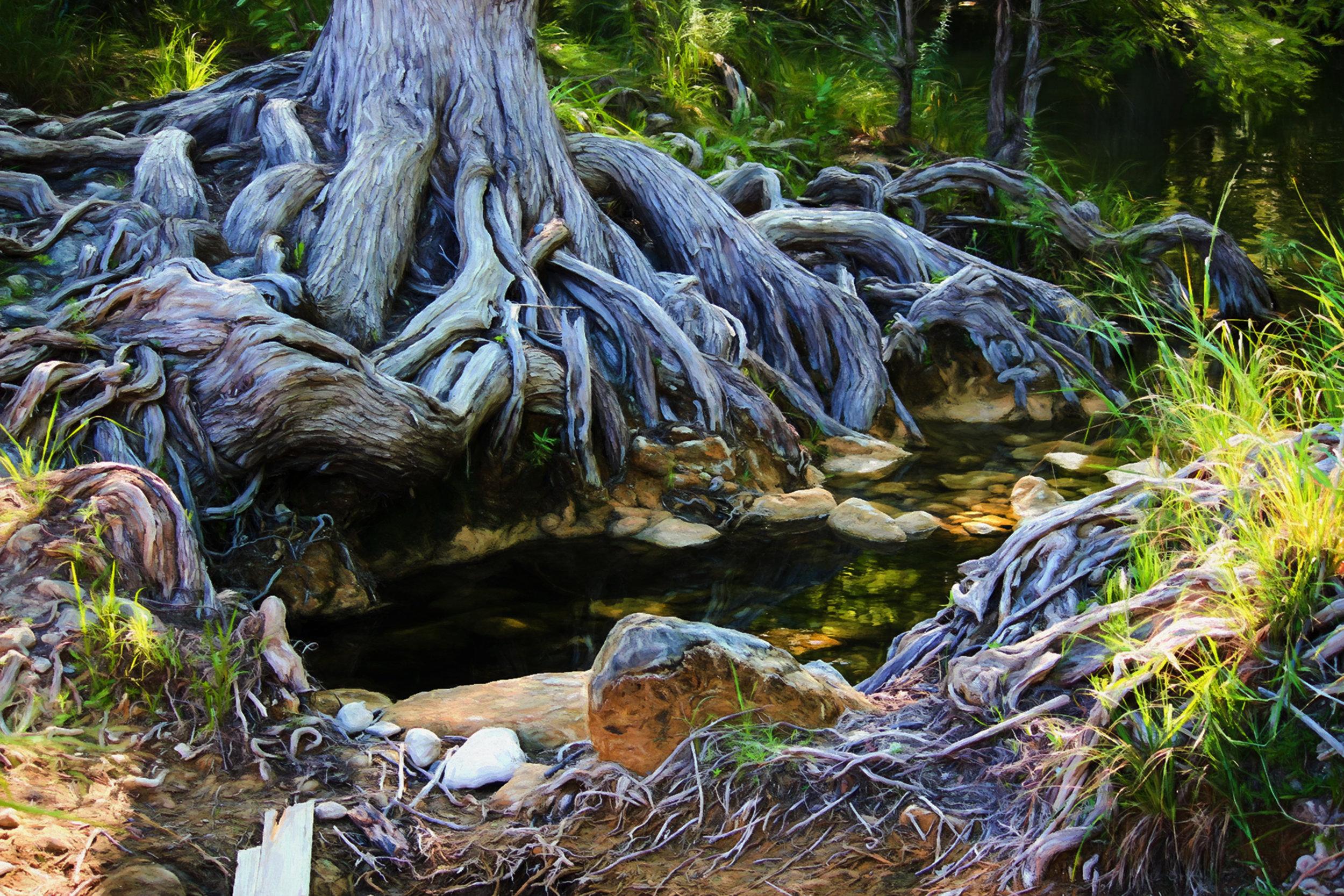 Wimberley Roots.jpg