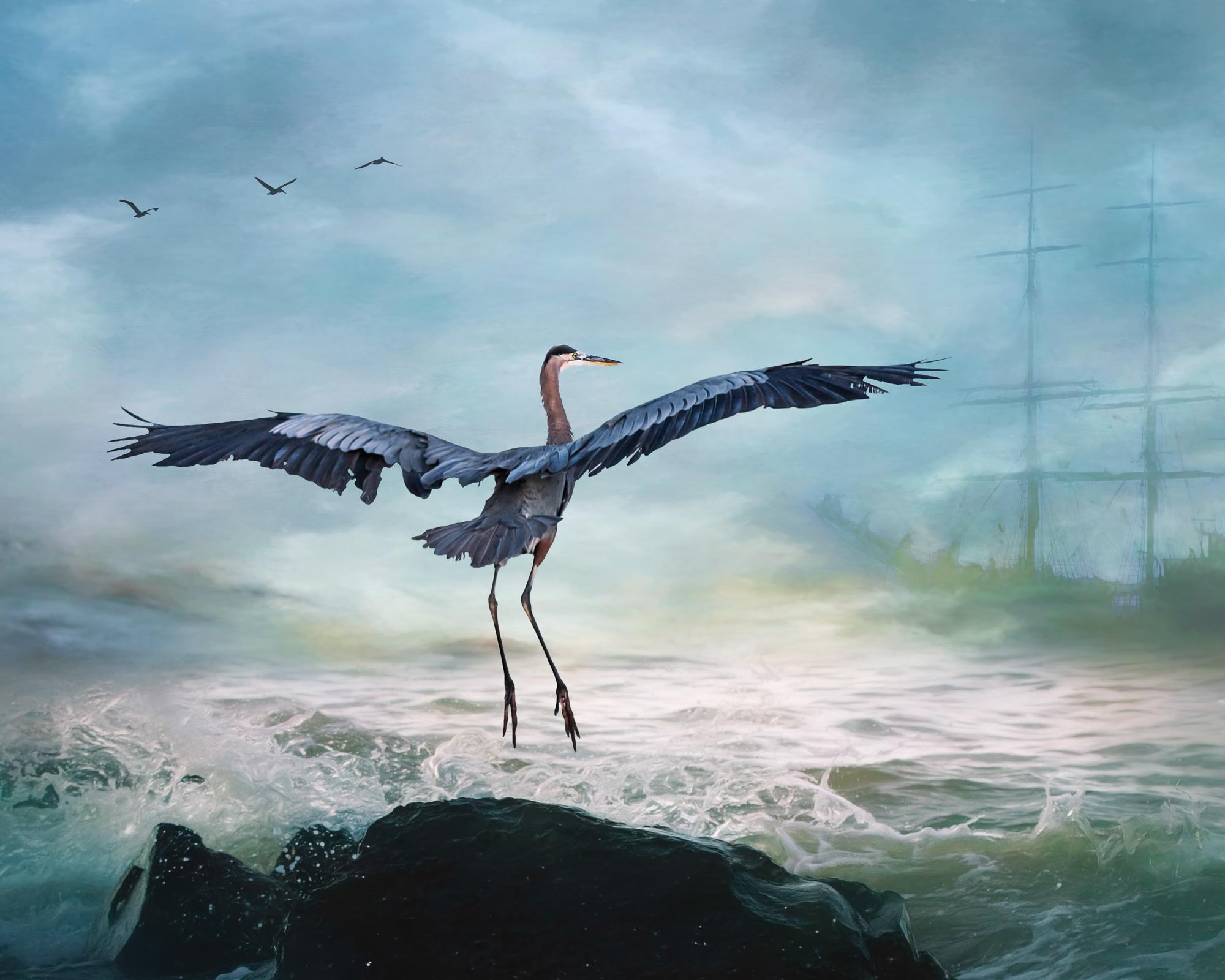 Blue Heron 3-40.jpg