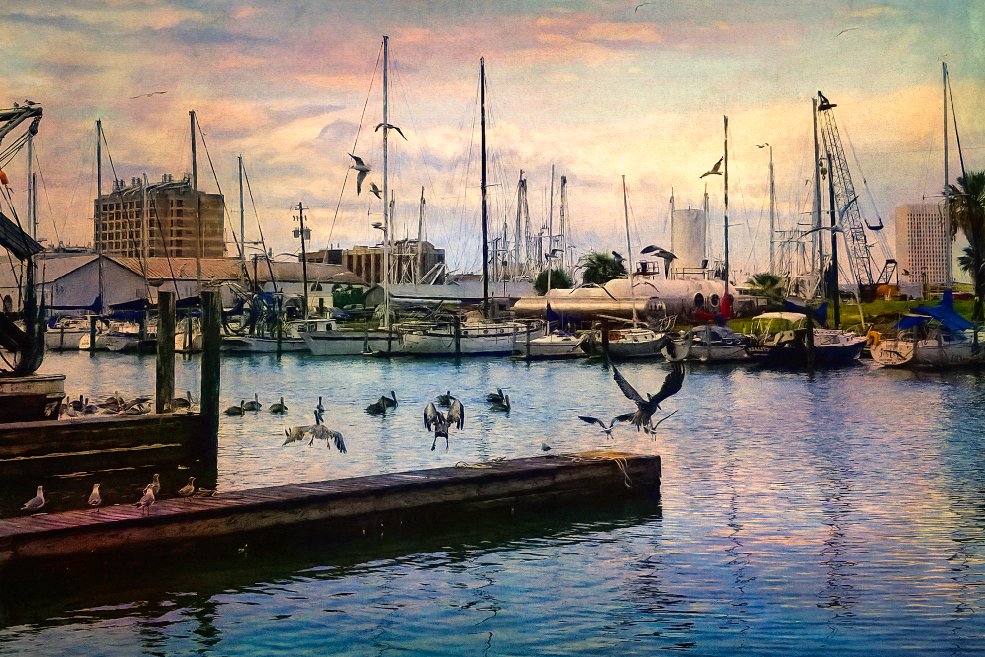 Pelicans at the Marina (24x16)-44.jpg