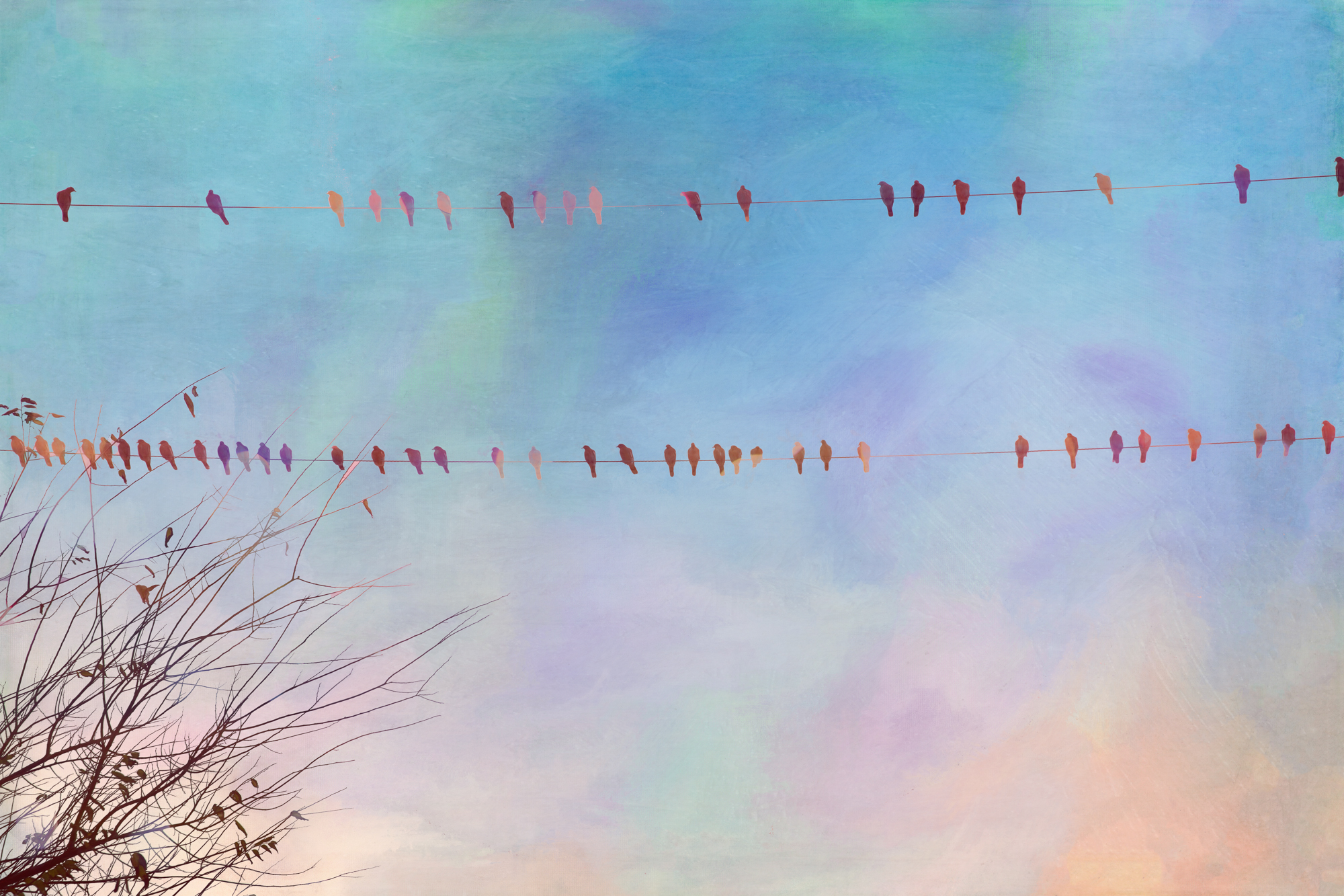 Birds on a Wire-75.jpg