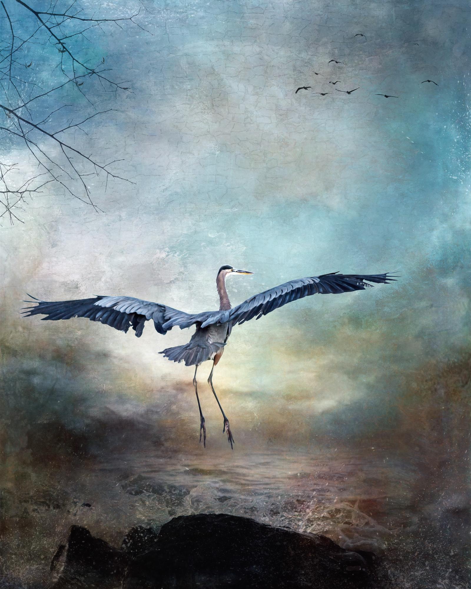 Blue Heron-82.jpg